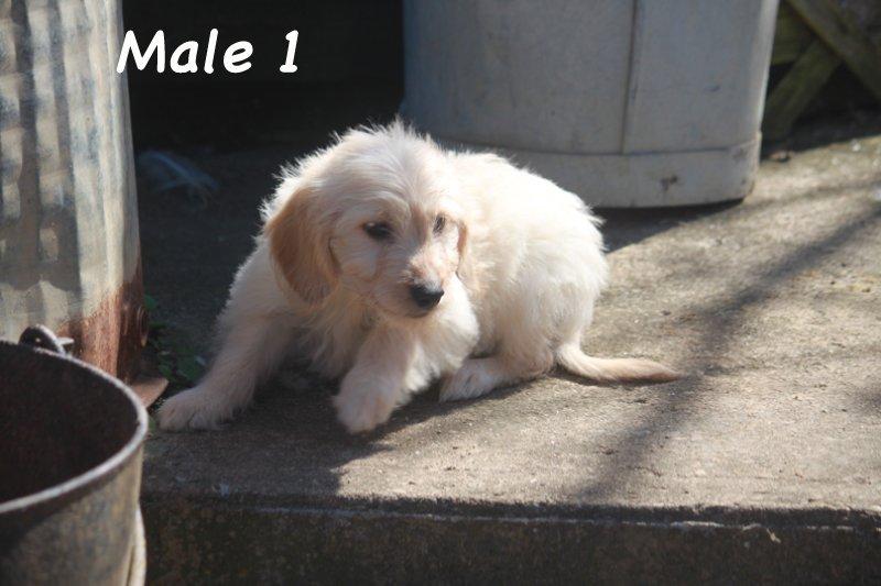 male1c
