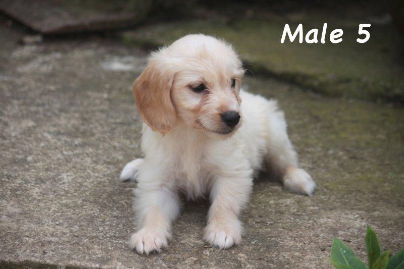 male5
