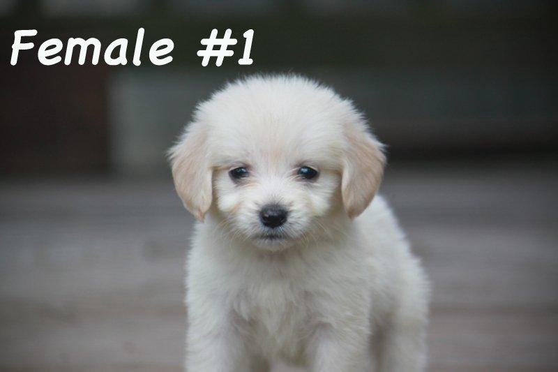 female1d.jpg