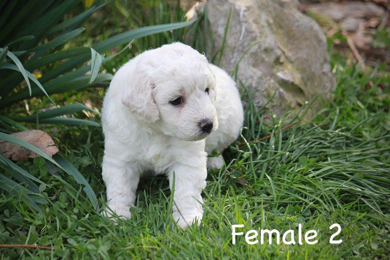 female2d