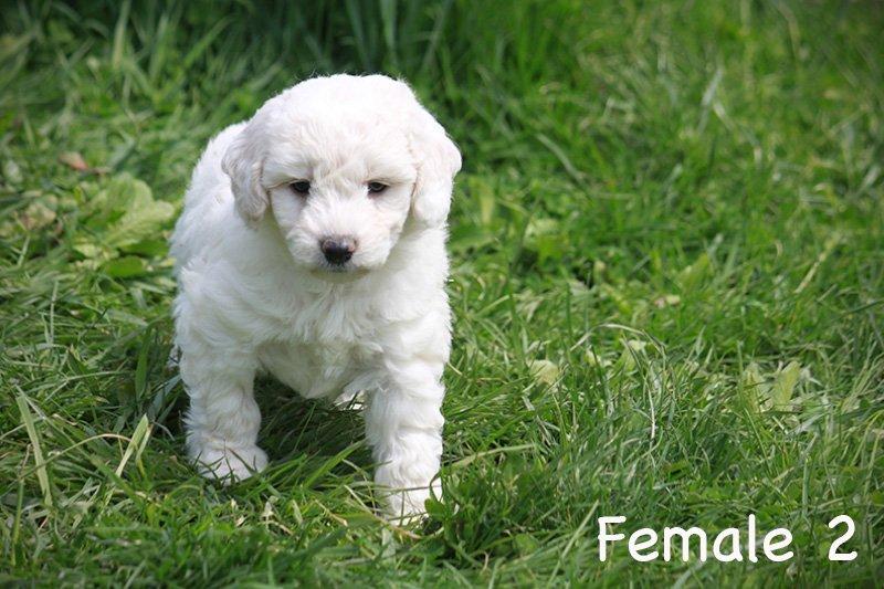 female2f