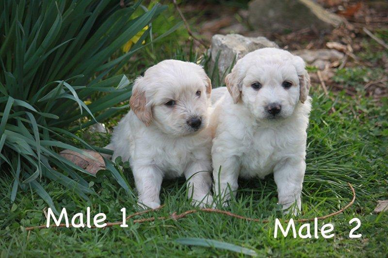 males1
