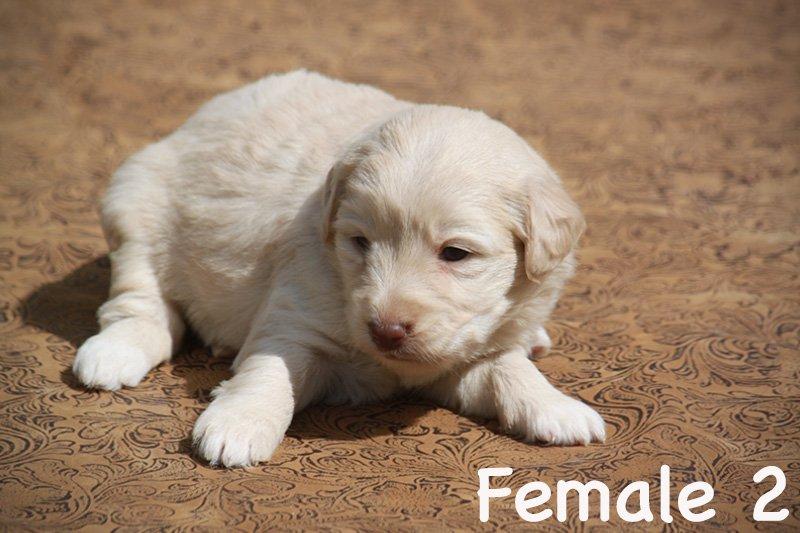 female2a