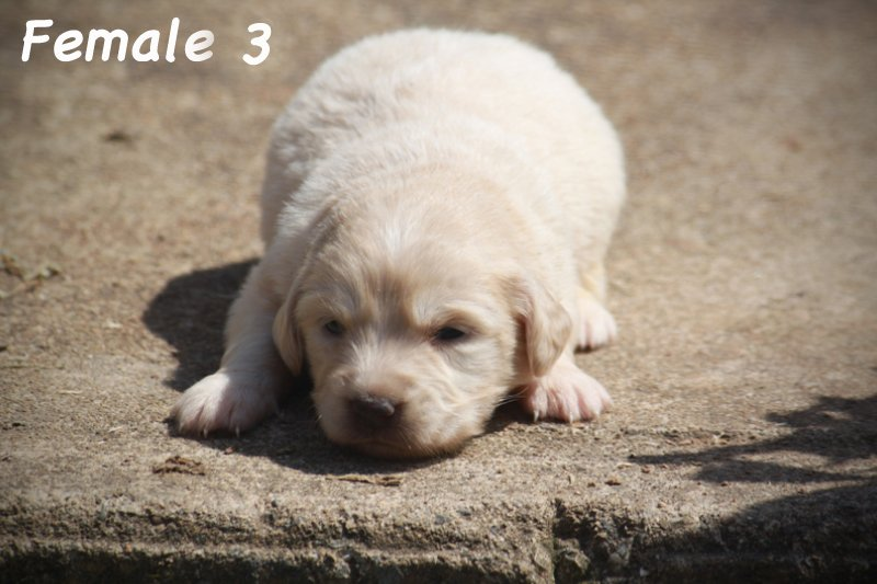 1_female3