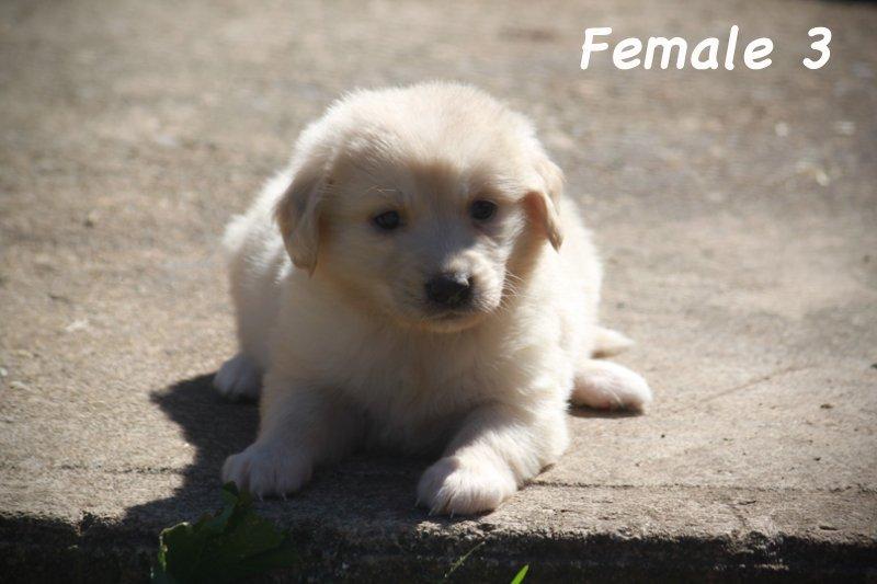 female3b