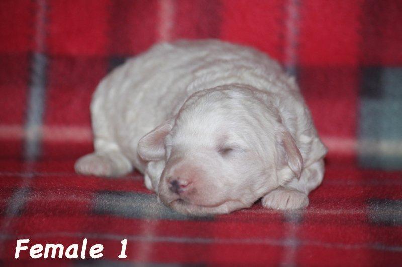 female1