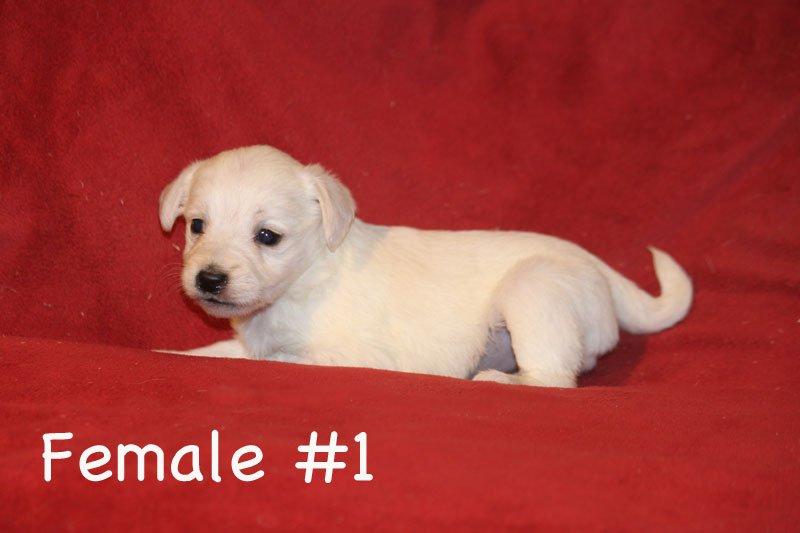 female1a.jpg