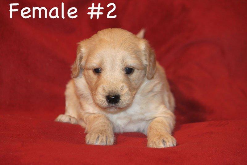 female2a.jpg