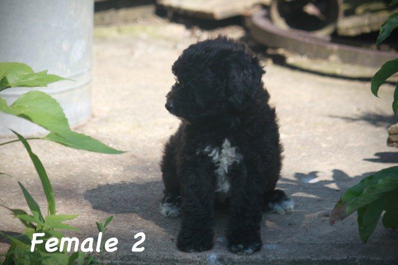 female2g