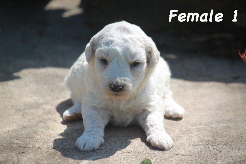 female1f