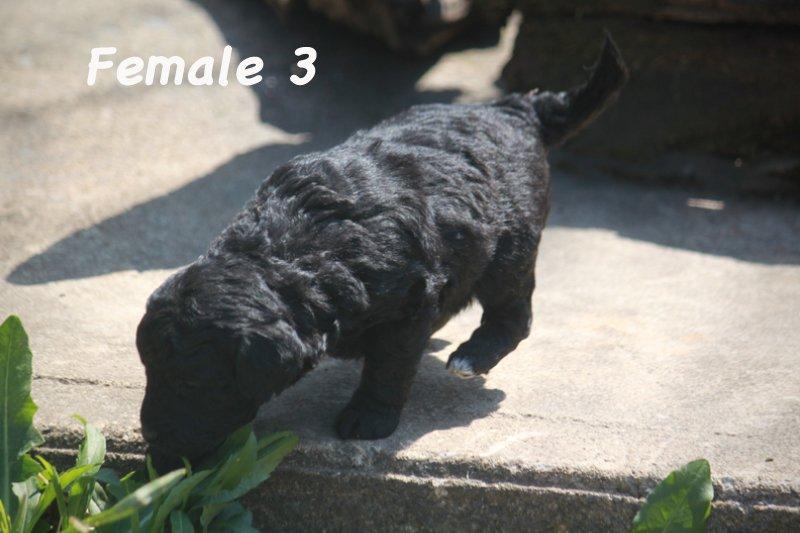 female3f