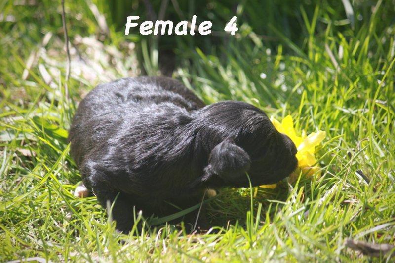 female4c