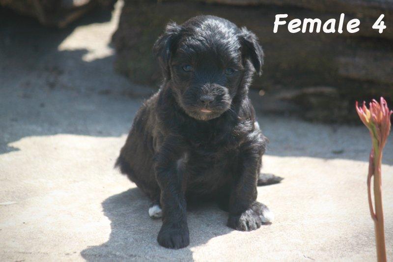 female4d