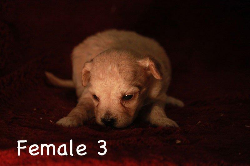 female3b.jpg