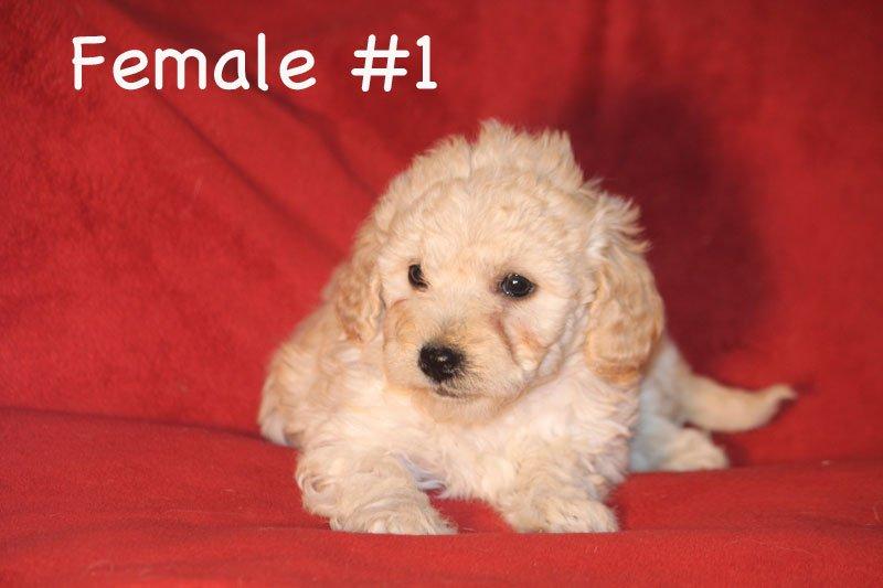 female1c.jpg