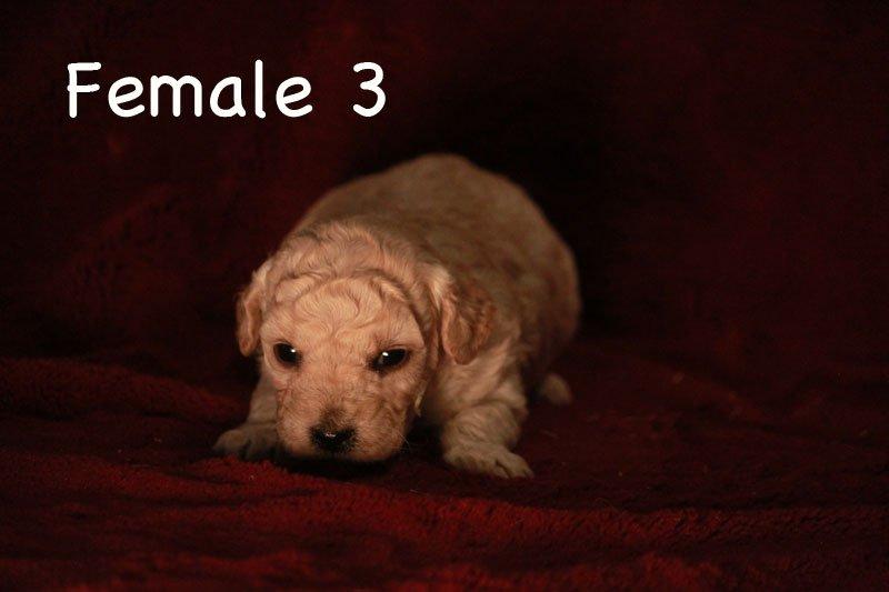 female3a.jpg