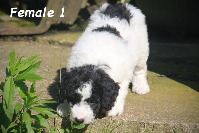 female1d