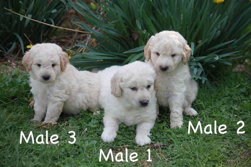 2_males