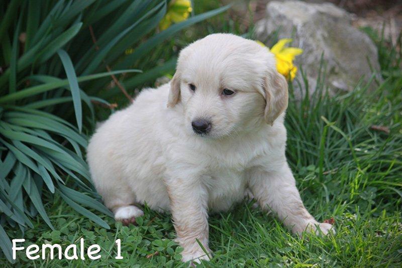 female1e