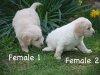 1_girls2