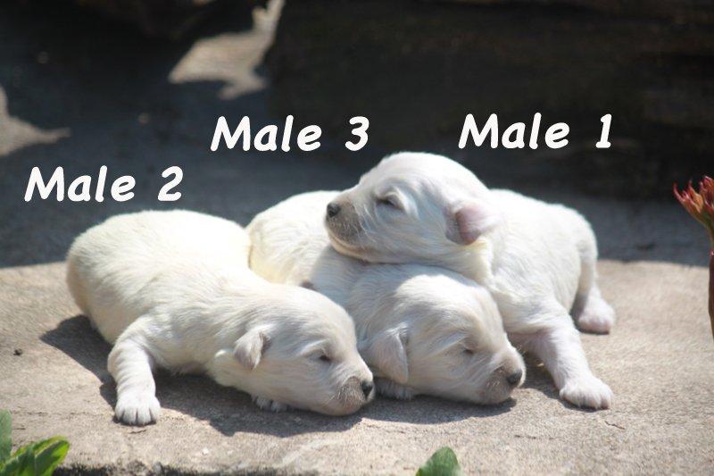 males