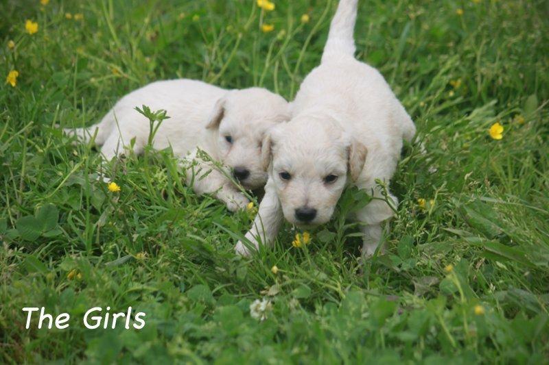1_thegirls