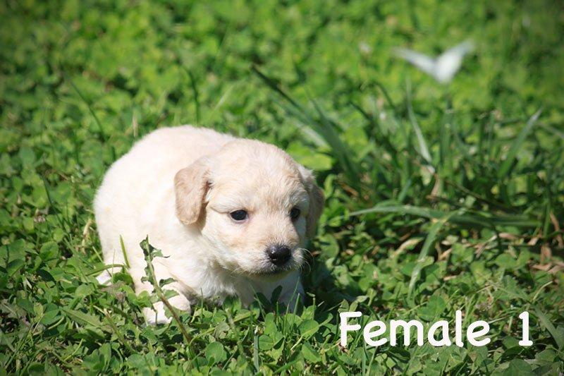 female1a
