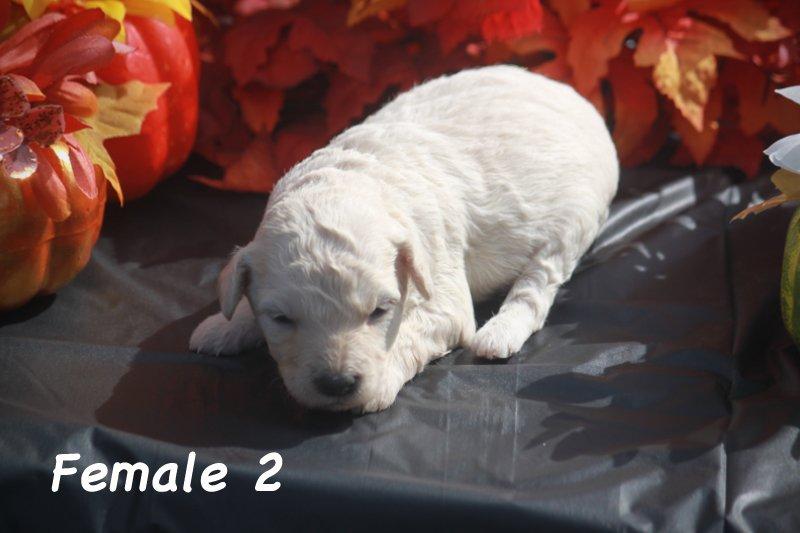 female2b