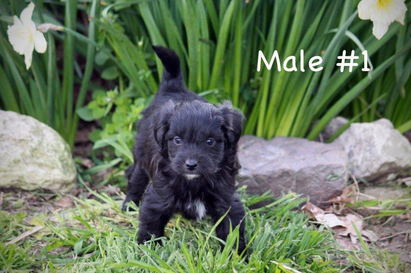 male1.jpg