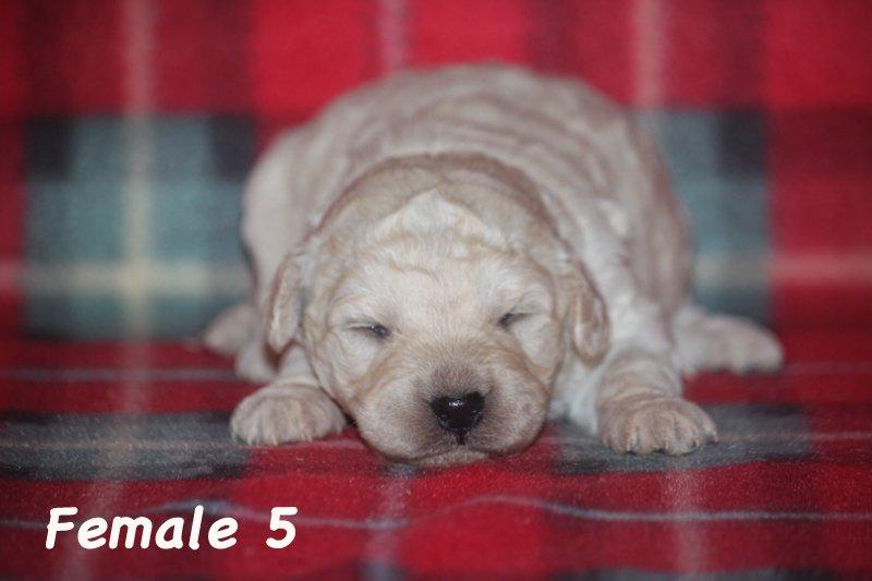 female5