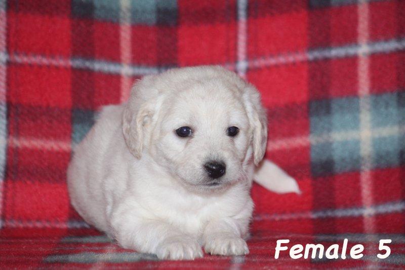 female5b