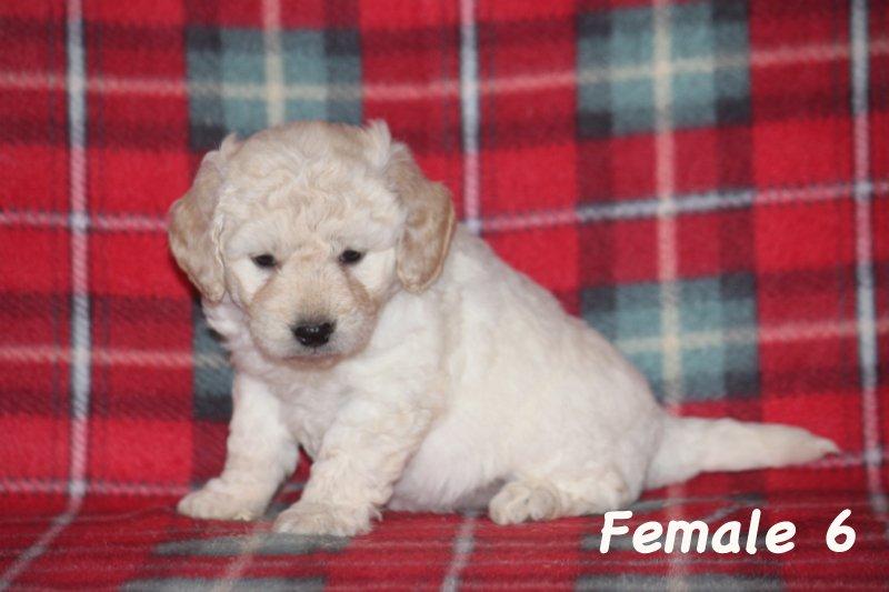 female6b