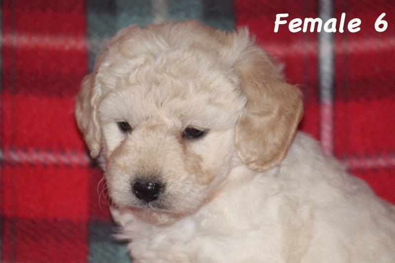 female6c