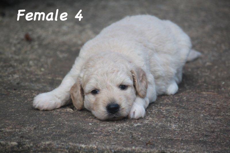 female4