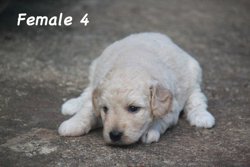 female4a