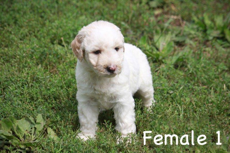 female1c