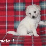 female1b
