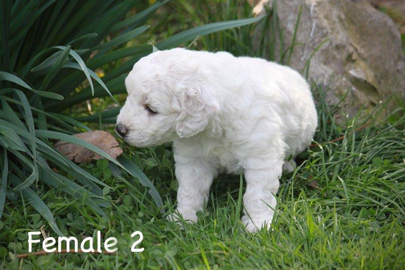 female2e