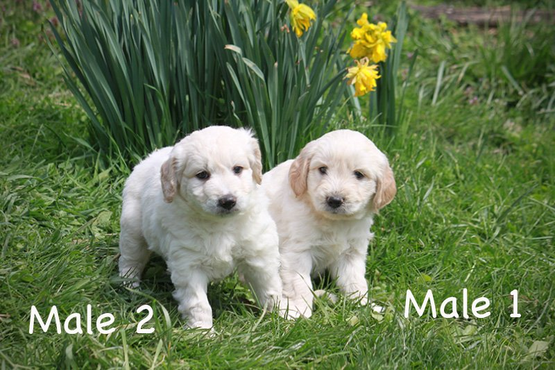 males2