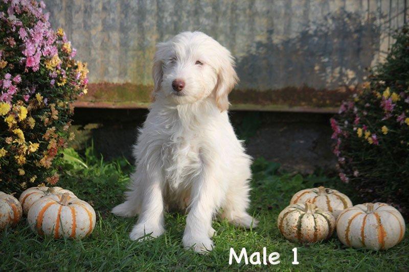 male1d