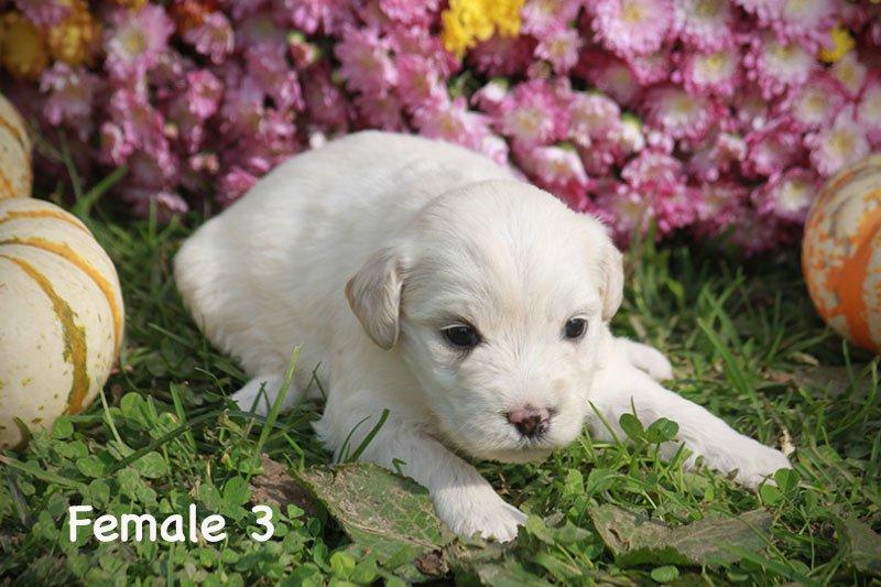 female3a