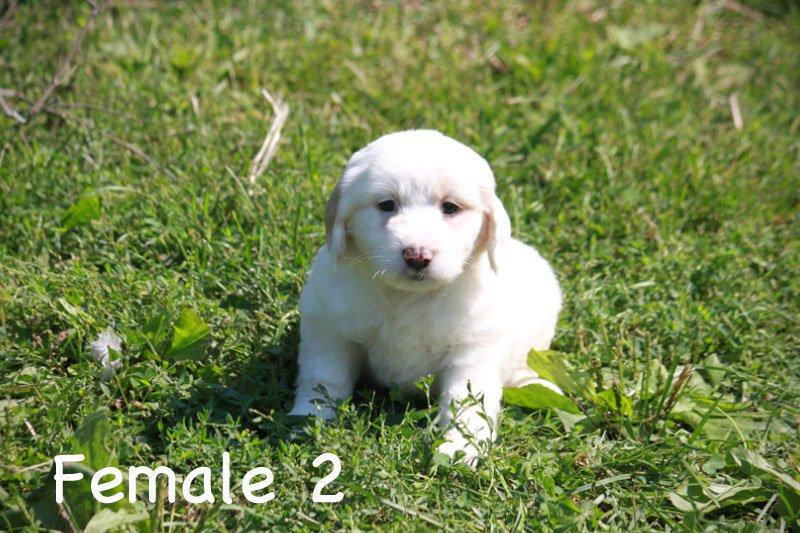 female2c