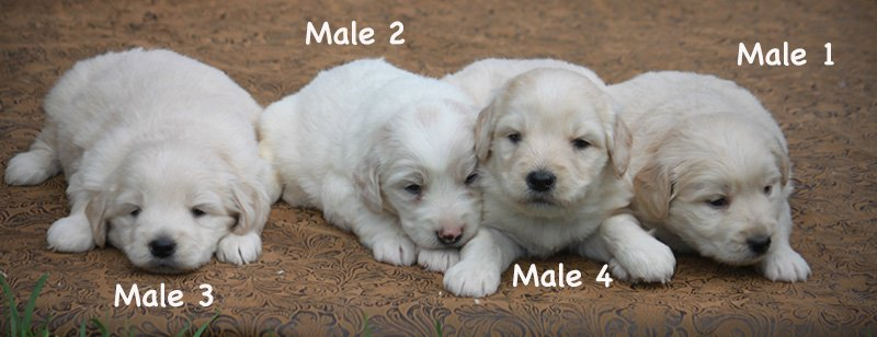 males3