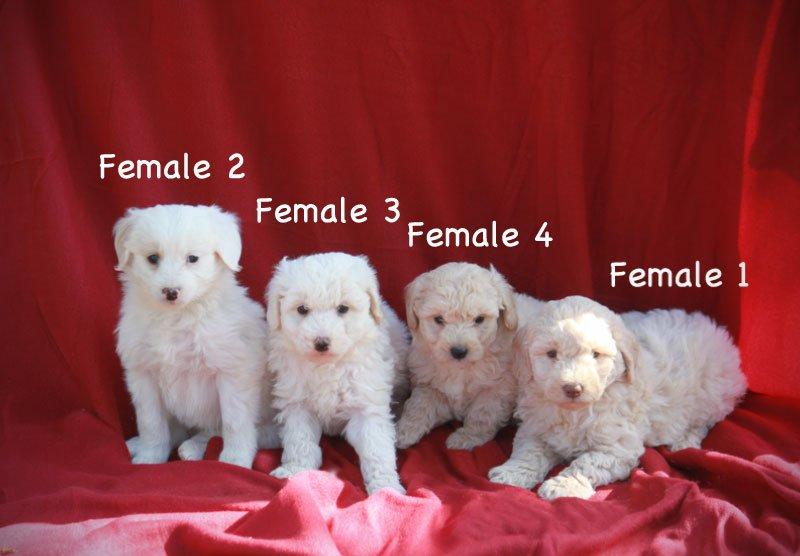 females2