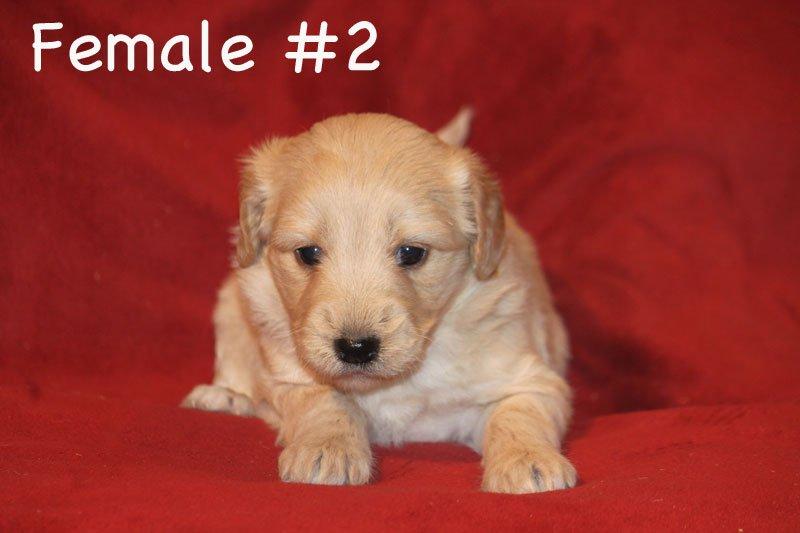 female2.jpg