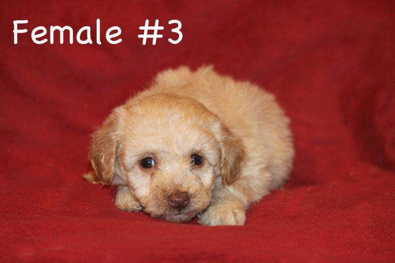 female3c.jpg