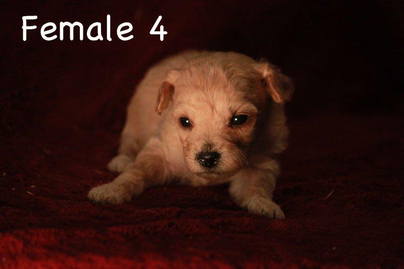 female4.jpg