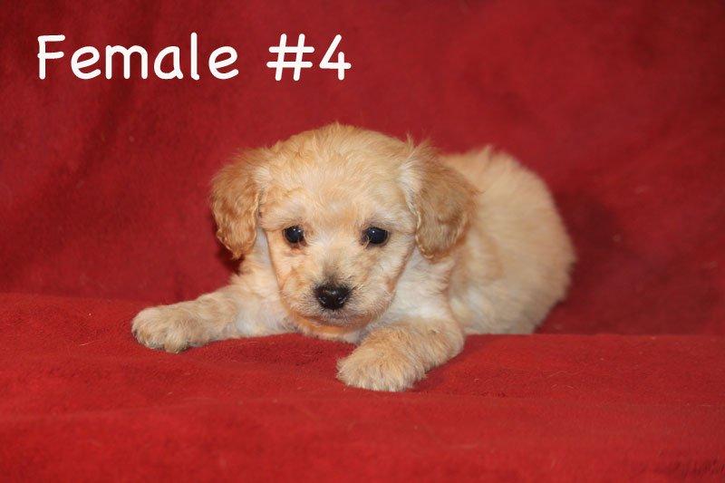 female4c.jpg