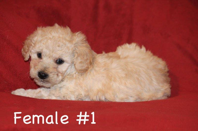 female1b.jpg