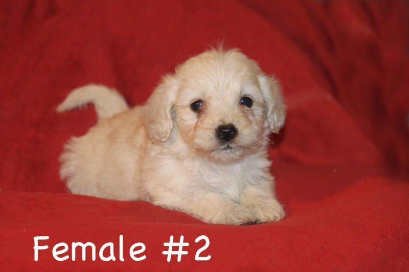 female2c.jpg